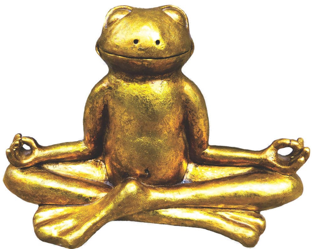Der fabelhafte Klang der Nieren_Bild Goldfrosch meditierend